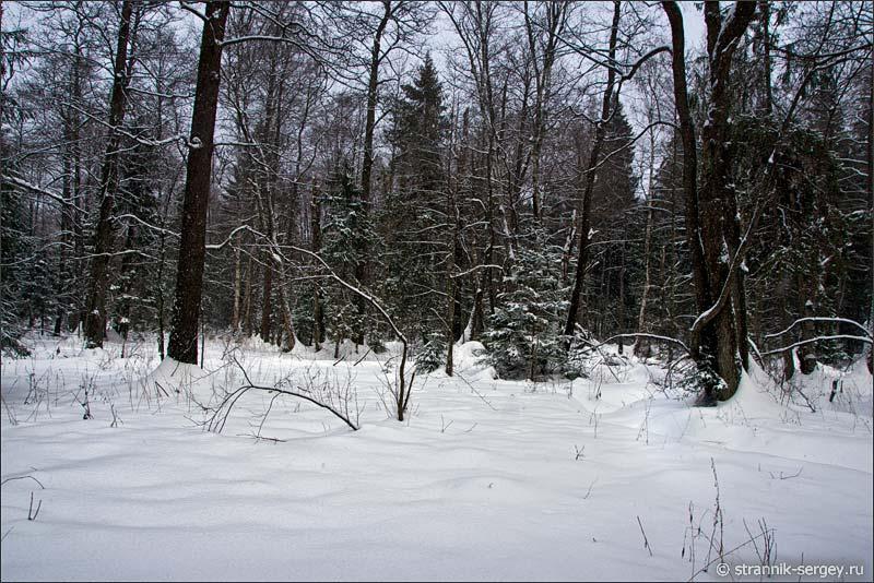 река Ильмена в еловом лесу