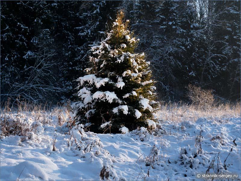 Рождественская история - в лесу родилась елочка