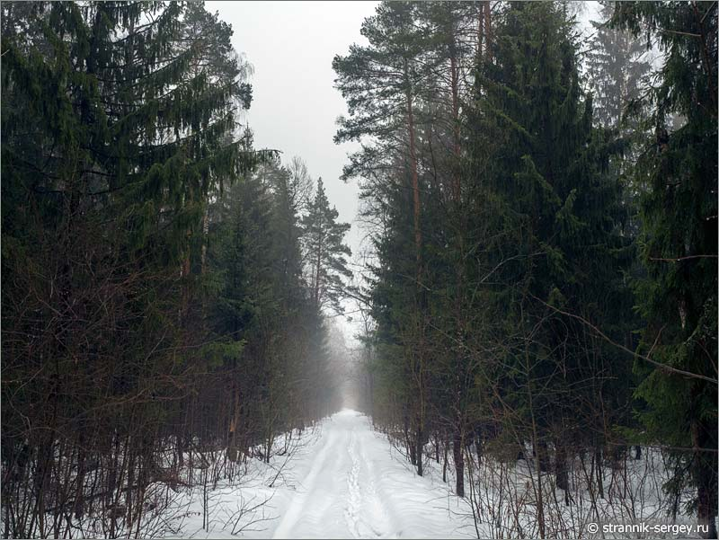 Весна в лесу, туман