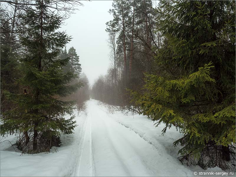 Лес весной туман