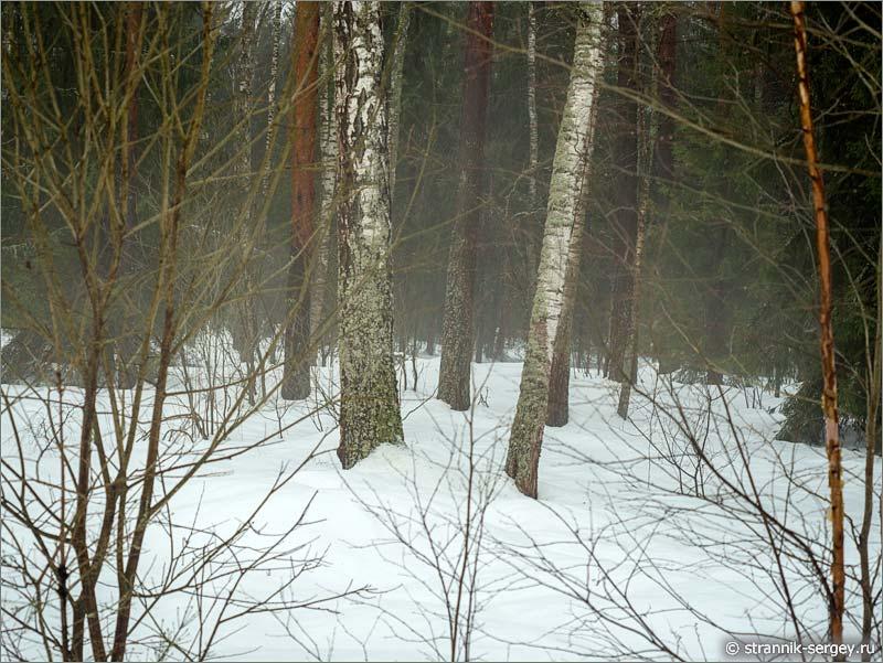 Туман весной в лесу