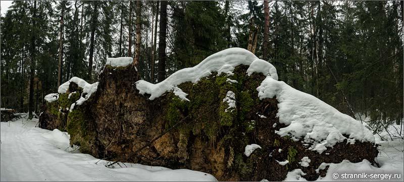 Поваленные деревья в старом лесу