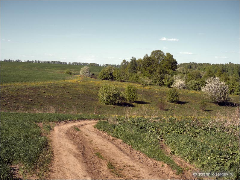 Дорога поле дикие яблони