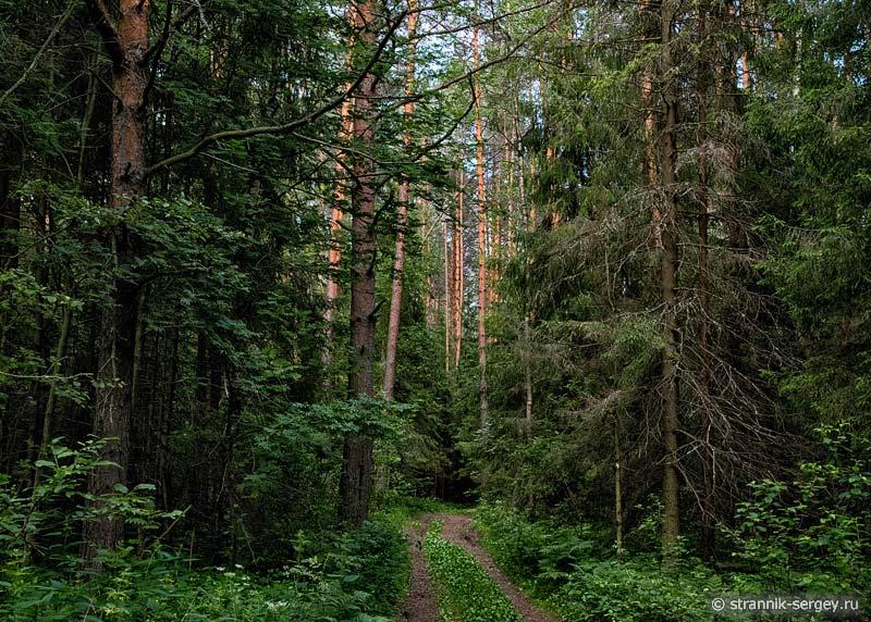 Лес возле реки Нерли Клязьменской