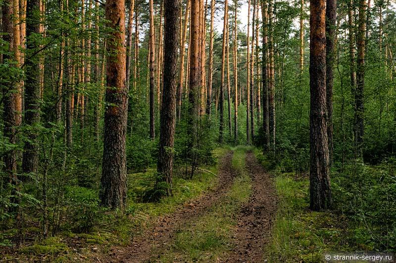 Лес у реке Нерль Клязьминская