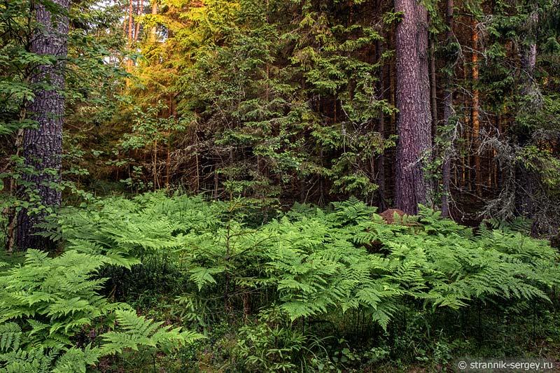 Утреннее утро в лесу