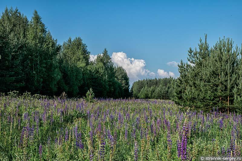 Лес и поле возле села Пречистое