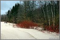 Лыжный поход выходного дня  Некрасовская
